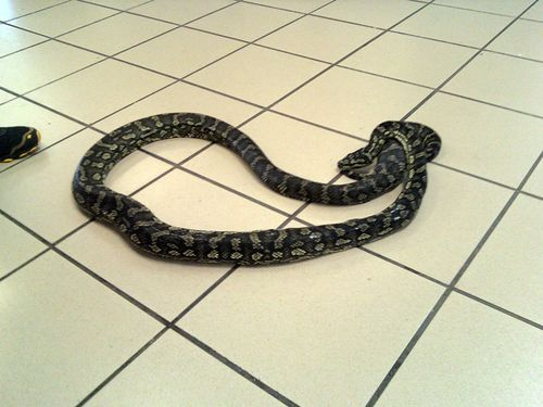 Snake-on-floor