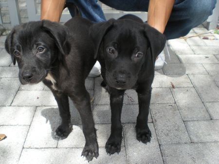 Puppies together