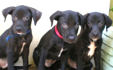 Three labs