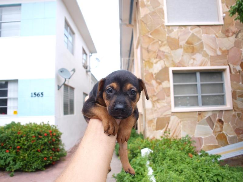 Puppy september 2010