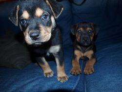 Puppy 2 september 2010