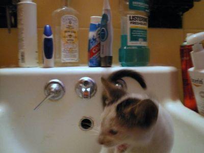 Cat-bath-2