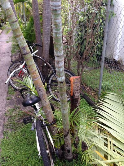 Palm tree bike 2